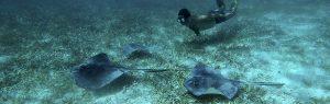 Recomendaciones para iniciarse en el Snorkel